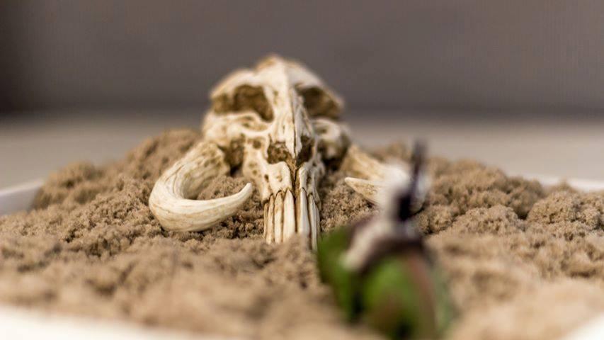 Star Wars Return of the Jedi Mythosaur Mini Skull Sculpture Desk Shelf Garden