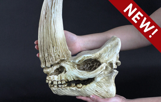 mudhorn skull from The Mandalorian - Star Wars decor